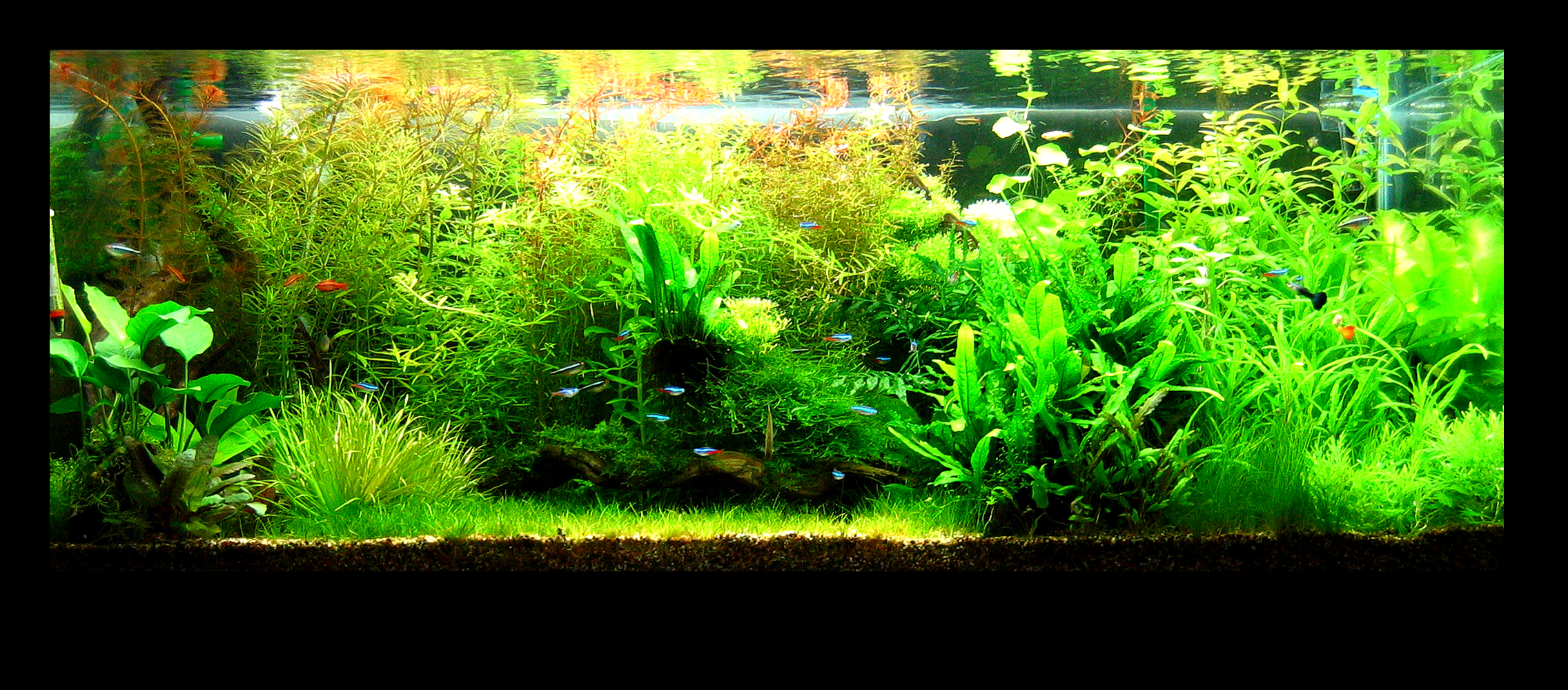 Here are the pictures of my planted tank, what you see here was the ...